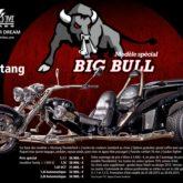 Bigbull Promotion Mustang